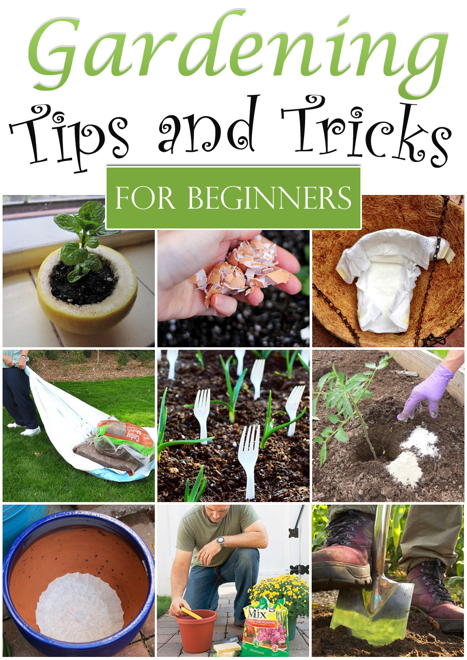 Gardening ideas for beginners home design ideas and pictures for Gardening tips