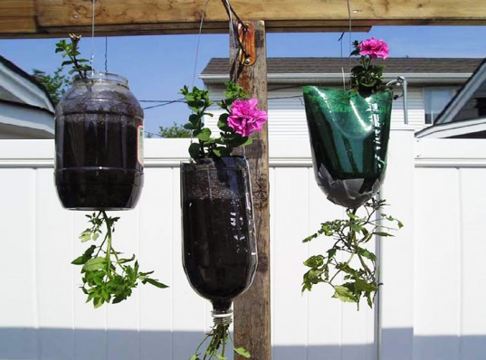 Hanging Planter with a Recycled Plastic Soda Bottle