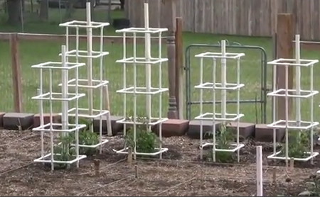 Build PVC Tomato Cages