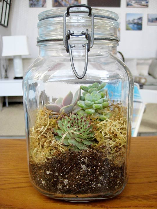 Terrarium in a Jar