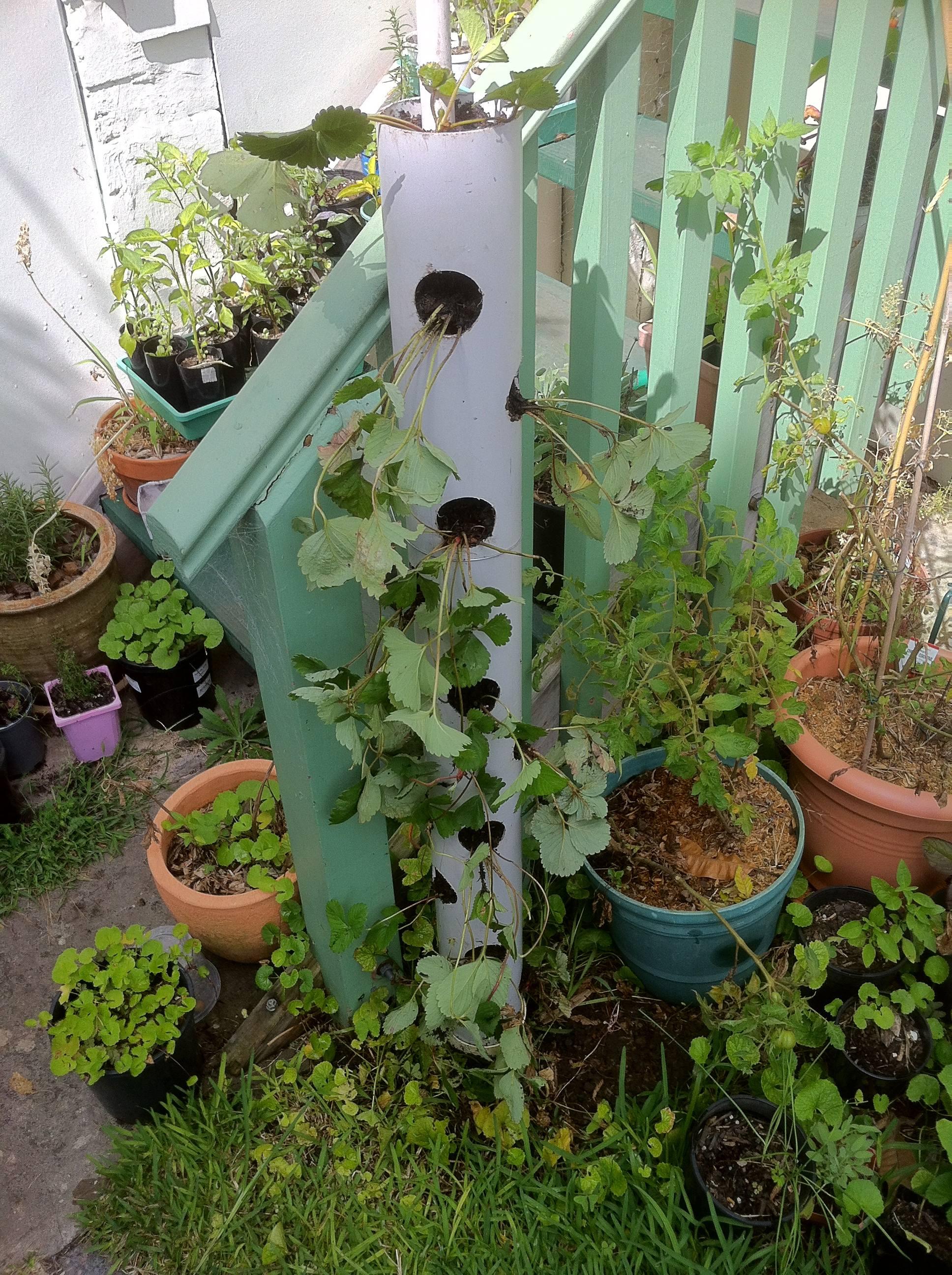 make a vertical strawberry tube planter