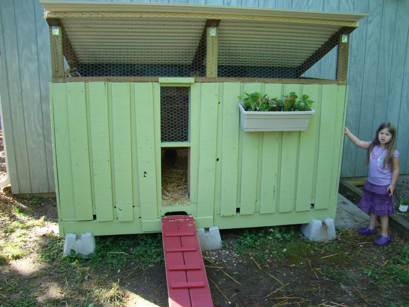 12 backyard pallet projects for today 39 s homestead for How to build a chicken coop from wooden pallets