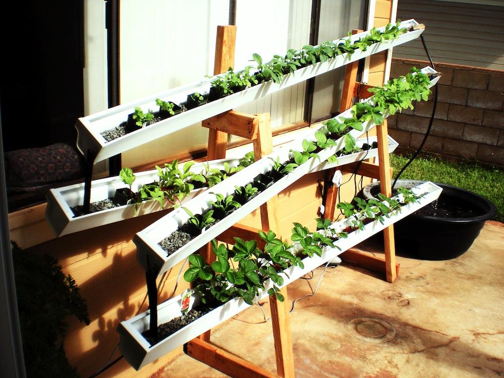 Build a self-watering aquaponic rain gutter garden