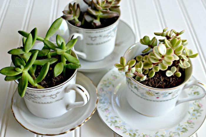 Create a tea cup succulent garden