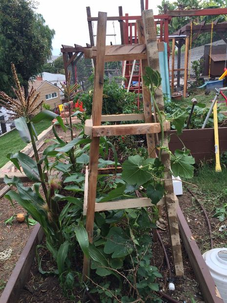 Make a garden trellis to help support climbing plants