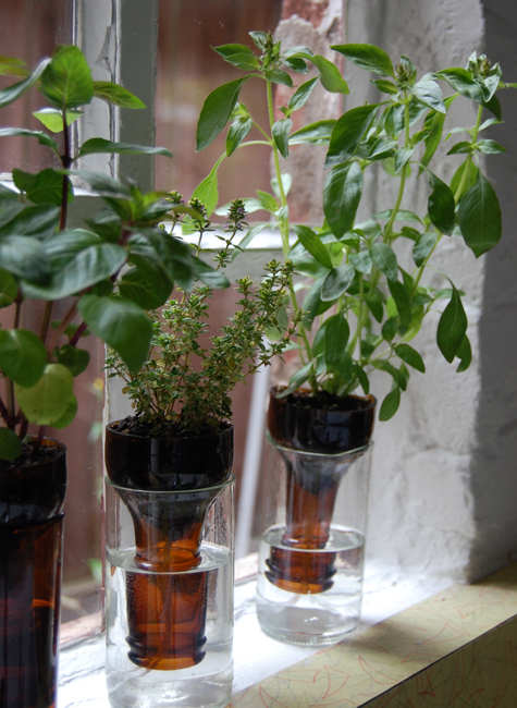 Make a self-watering planter out of old water bottles