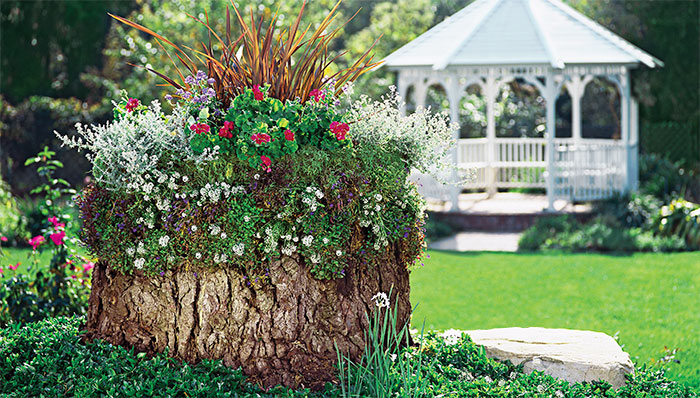 Turn old tree stumps into beautiful flower planters