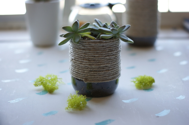 Upcycle a plain plastic bottle into a charming succulent planter
