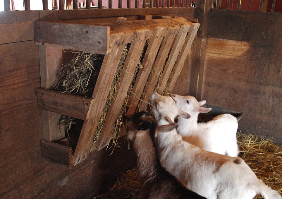 Wood Pallet Hay Feeder