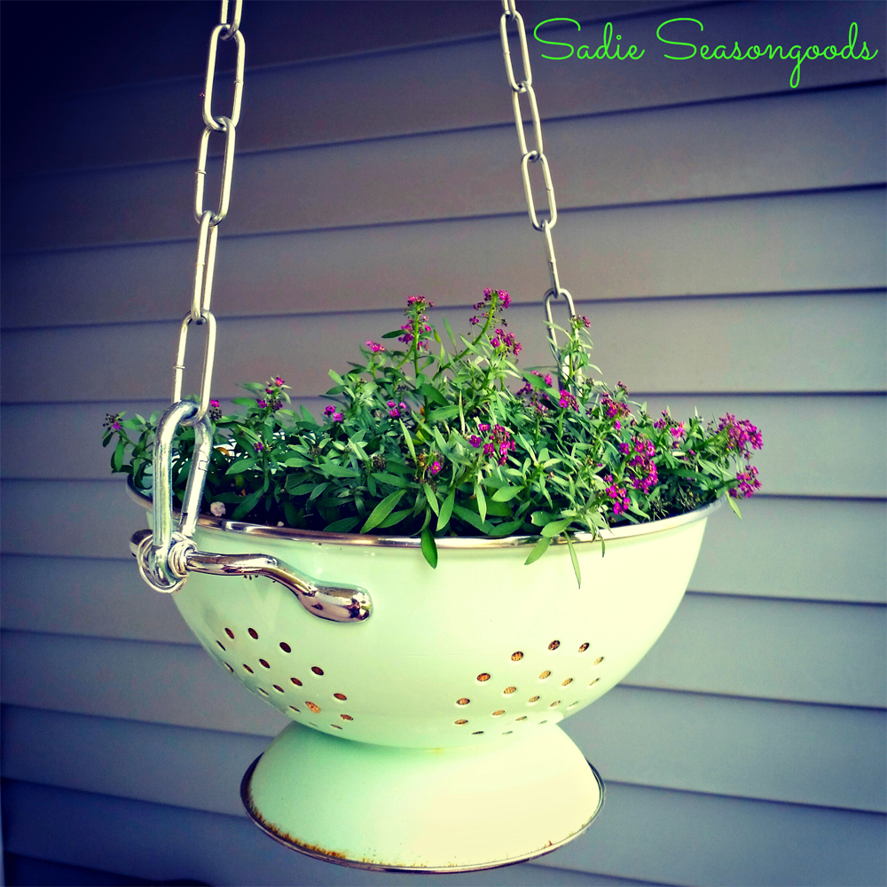 You can also use a colander as a planter
