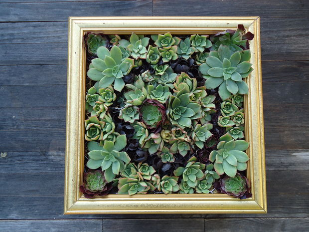 create a wall garden from the succulents