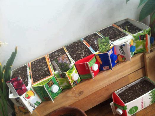reuse milk or juice cartons for a raised bed urban garden