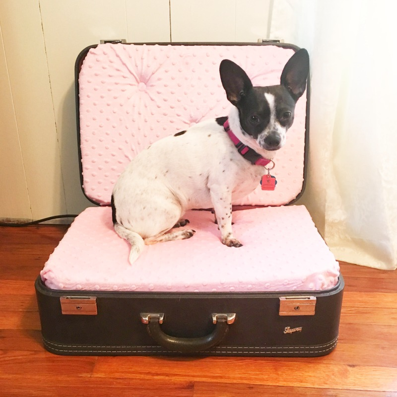 From Suitcase to Pet Bed