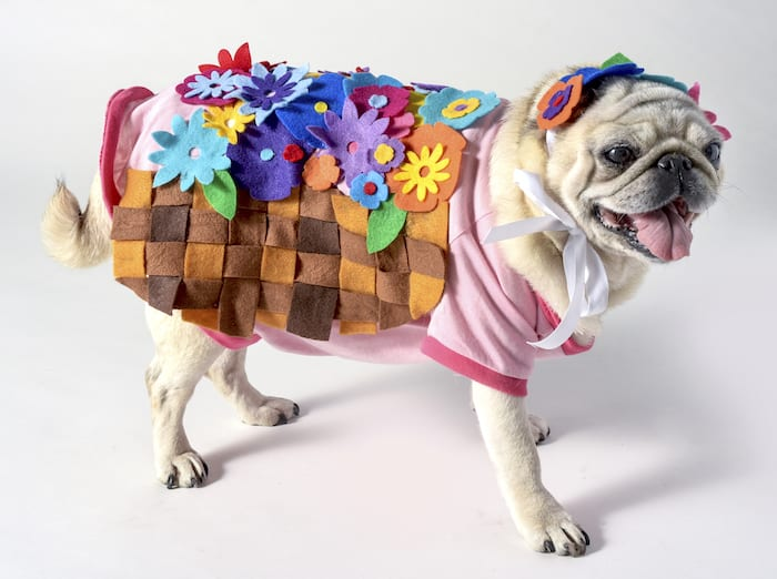 Flower Basket Costume