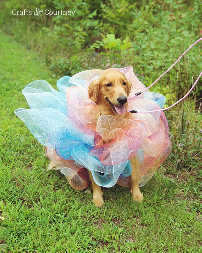 Loofah Dog Costume