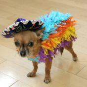 Pinata Pet Costume