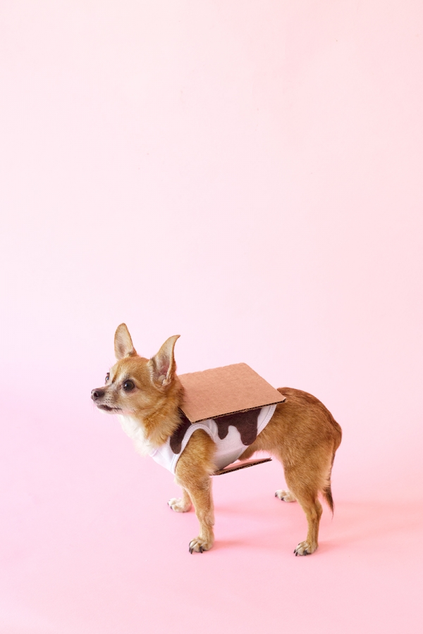 S'mores Dog Costume