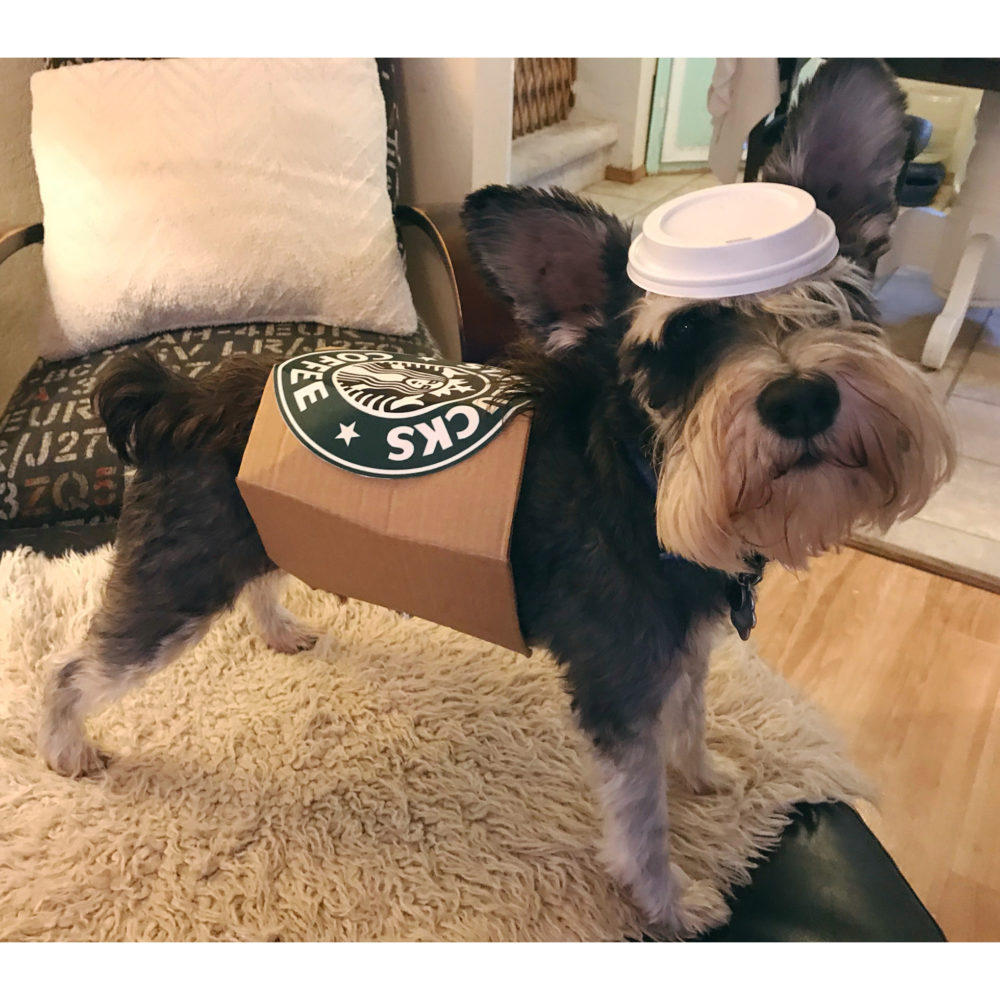 Starbucks Cup Dog Costume