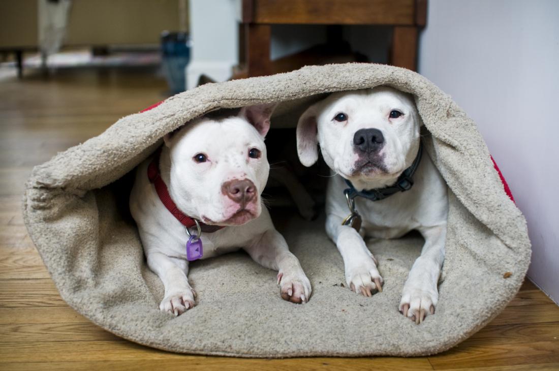 doubledog sleeping bag